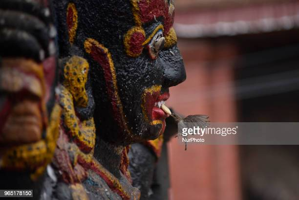 A sparrow steals offering food by the devotees on the mouth of Kaal Bhairab's statue the Hindu god of destruction at Basantapur Durbar Square...