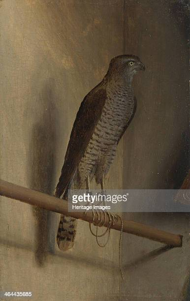A Sparrowhawk 1510s Found in the collection of the National Gallery London