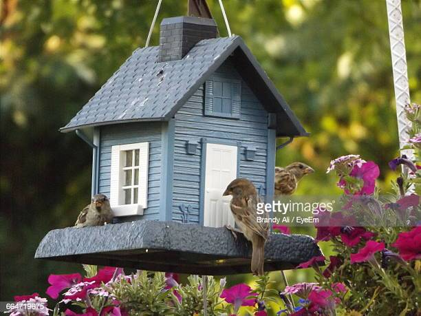 sparrows by birdhouse over plants - birdhouse stock pictures, royalty-free photos & images
