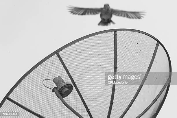 sparrows flying over satellite dish - crmacedonio stock pictures, royalty-free photos & images