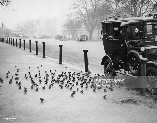 Sparrows gather on the pavement beside a taxi as they await feeding in Hyde Park London England United Kingdom 11 January 1934 The taxi carrying a...