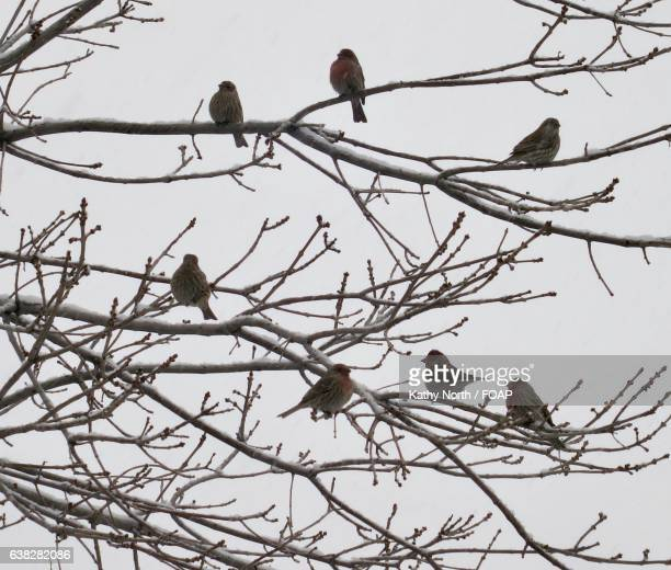 Sparrows perching on branch