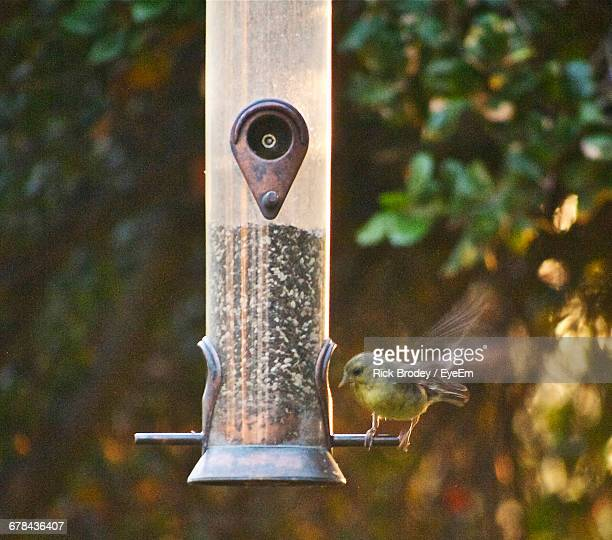 Sparrows Perching On Feeder