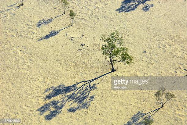 Sparse arid woodland in drought from the air The arid vegetation of Warburton River and associated floodplain and dunefield habitats supports rich...