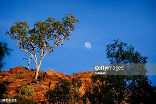 Sparse vegetation on a ridge of the Constance Range Boodjamulla Lawn Hill National Park northwest Queensland Australia