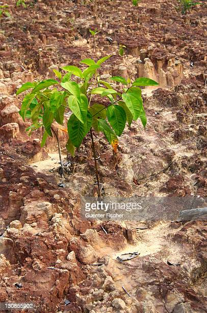 Sparsely overgrown laterite soil, Amazon region, Brazil