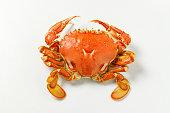 spatula crab