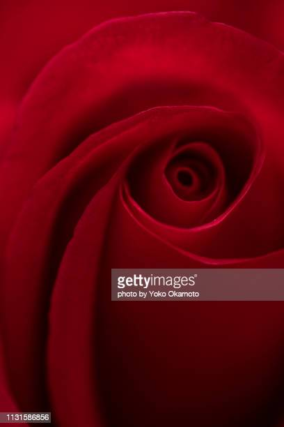 Speaking of red roses, this flower