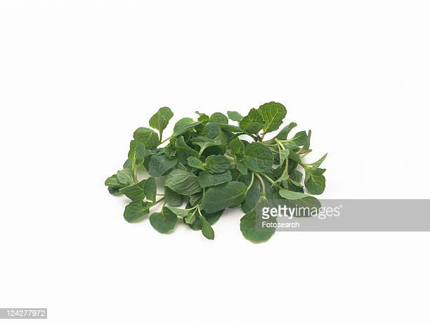 Spearmint, high angle view