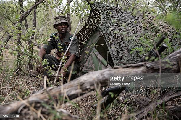 A Special fieldranger on a antipoaching patrol on November 8 2014 at the Kruger National Park South Africa The suspected rhino poachers were in...