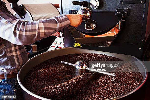 Specialist coffee shop. Coffee beans roasting in a drum, being stirred with a metal paddle.