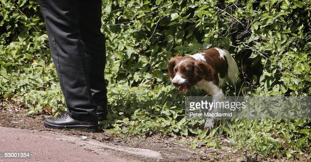 Specialist police sniffer dogs begin to search for clues in the Abigail Witchell case on the path that she took when she was stabbed in Little...