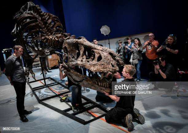 Specialists assemble the bones of a skeleton of a Tyrannosaurus dinosaur on May 24 2018 at the Jardin des Plantes Museum in Paris ahead of the...