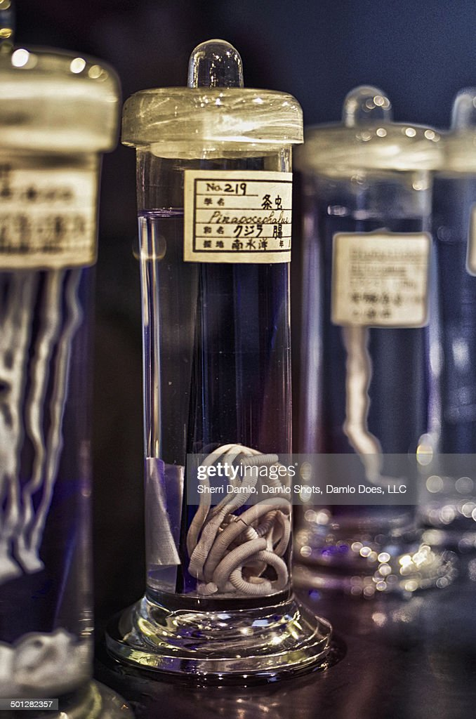 Specimen jar of parasites : Stock Photo