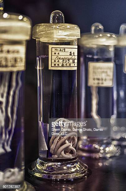 specimen jar of parasites - damlo does stock pictures, royalty-free photos & images