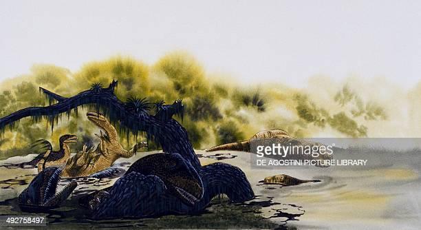 Specimens of Allosaurus dying Allosauridae Late Jurassic Illustration