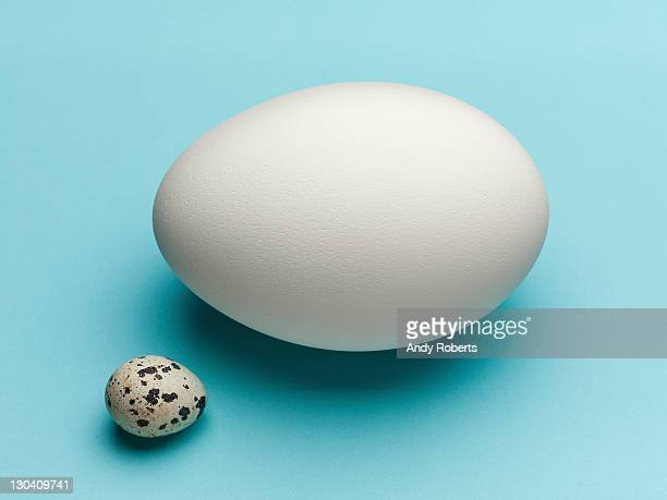 Speckled egg with white egg