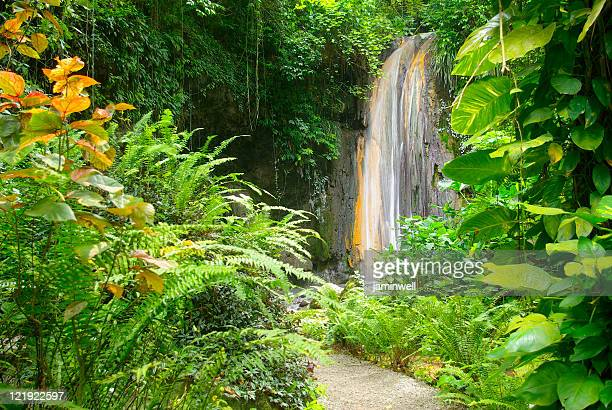 spectacular diamond falls of soufriere st lucia - st. lucia stock pictures, royalty-free photos & images