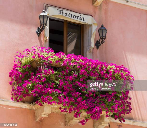 spectacular floral display beneath window of a typical trattoria, taormina, messina, sicily, italy - taormina stock pictures, royalty-free photos & images