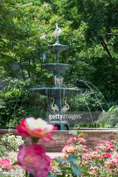 Spectacular Historic Waterfall Fountain with Spouting Geese at Merrick Rose Garden