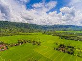 sukabumi extensive paddy rice fields marking