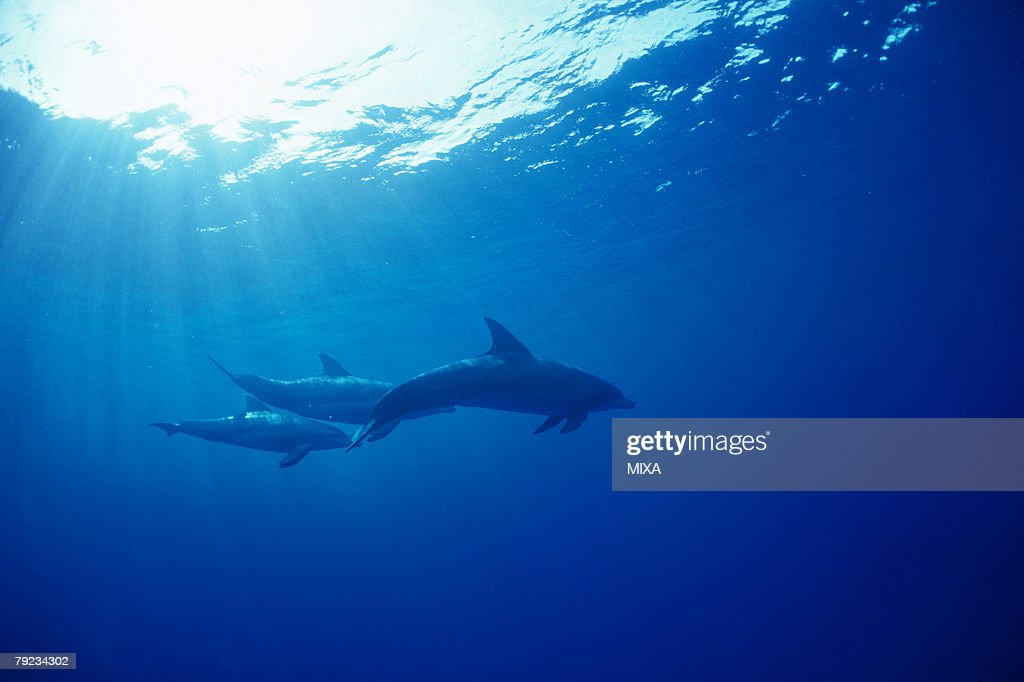 A spectacular view of dolphins swimming underwater : Stock Photo