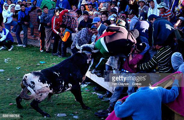 Spectator gets charged and almost gored during a Bull fight in Copacabana, Bolivia as a bull charges into the crowd. Although hurt the man was not...