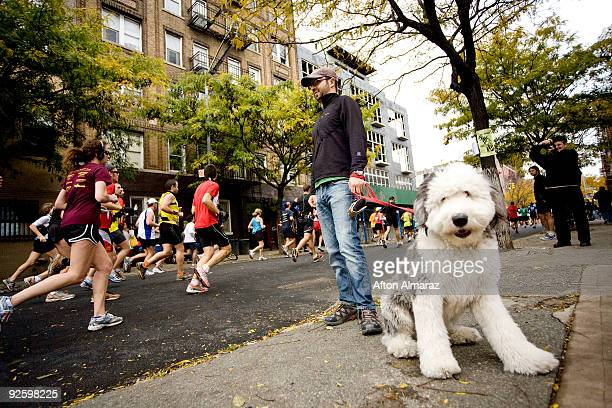 Spectator Jordan Stolper and his dog 'Zoe' watch as the runners of the 40th ING New York City Marathon pass through the Williamsburg section of the...