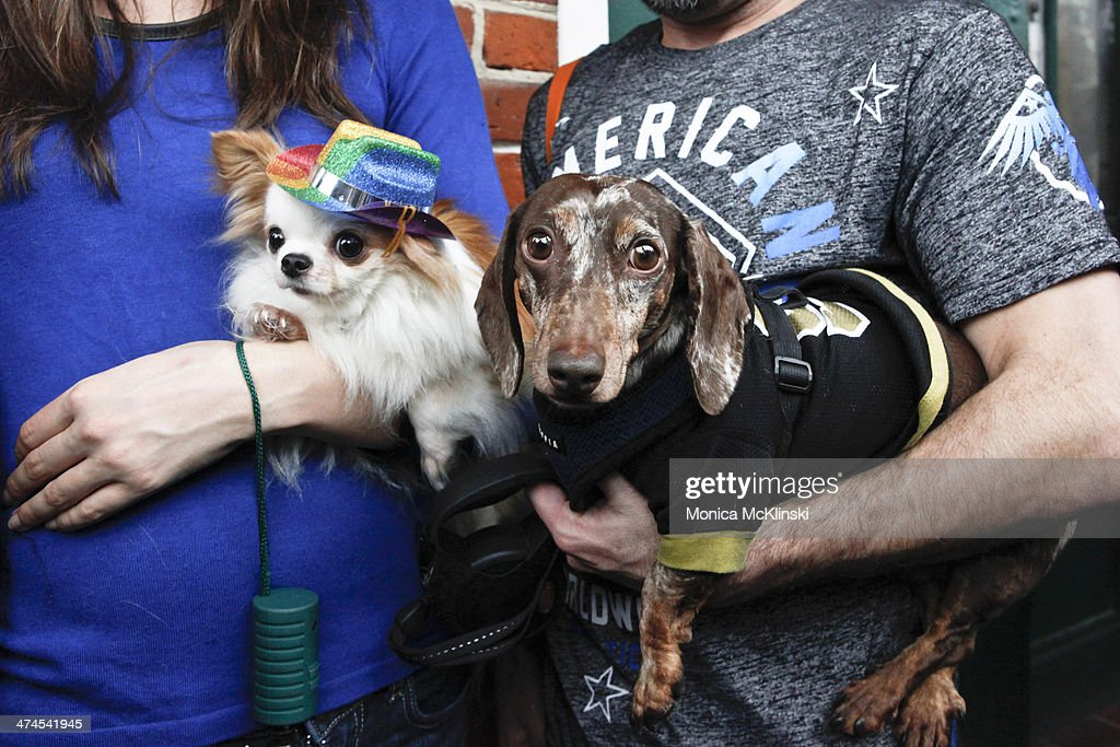 Spectators await The Mystic Krewe of Barkus, a non-profit organization that supports animal welfare groups on February 23, 2014 in New Orleans, Louisiana. DOGZILLA - Barkus Licks the Crescent City was the theme of the 22nd Mystic Krewe of Barkus Parade.