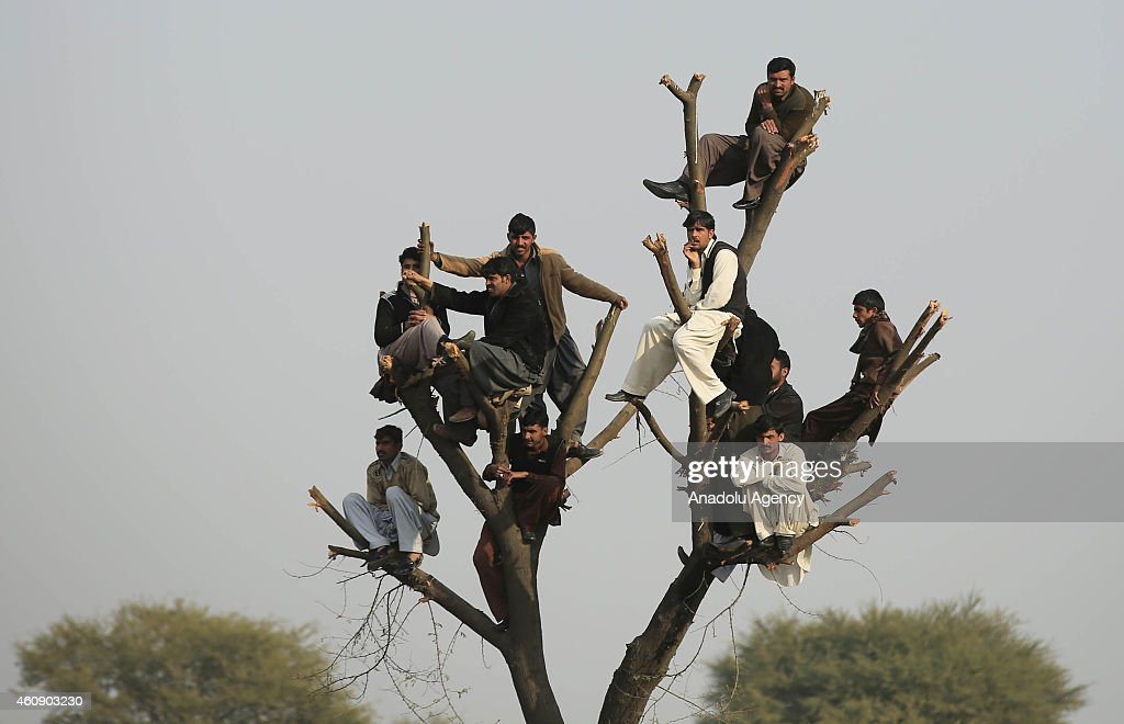 Spectators watch a dog fighting match from a tree, in an effort to get a better view in Tandapani village of Islamabad, Pakistan on December 28, 2014. Dog fighting and other forms of animal fighting are common in rural areas of Pakistan.