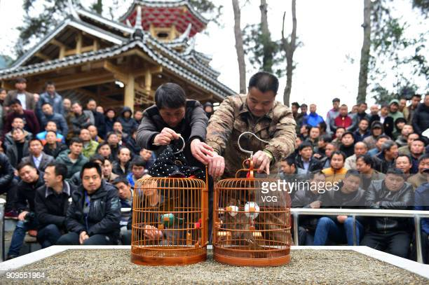 Spectators watch a traditional thrush fight to celebrate the upcoming New Year at Jianhe County on January 24 2018 in Qiandongnan Miao and Dong...