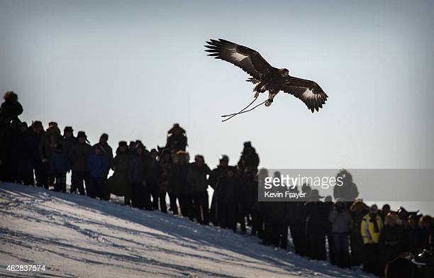 Spectators watch as an eagle flies above the crowd after it was released by a Chinese Kazakh eagle hunter not seen during a local competition on...