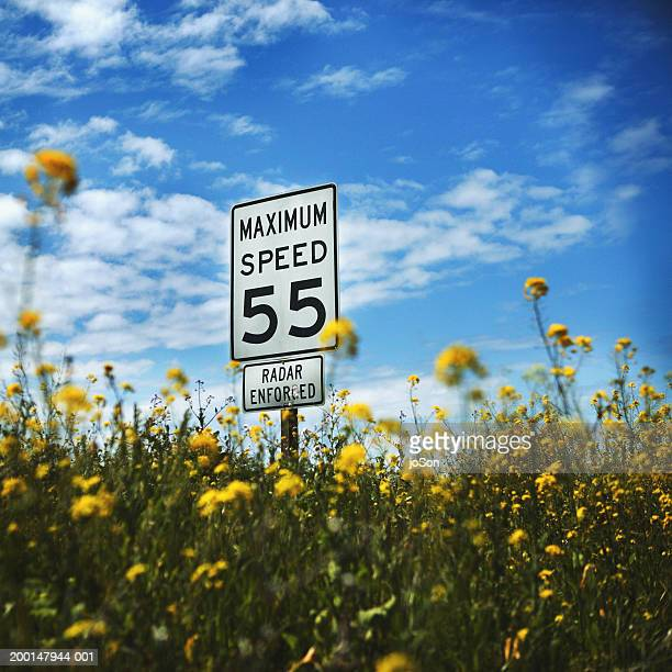 speed limit sign and wildflowers (focus on sign) - speed limit sign stock photos and pictures