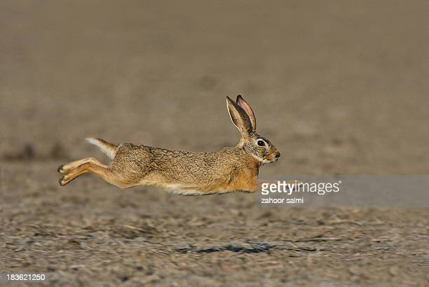 speed - lagomorphs stock pictures, royalty-free photos & images