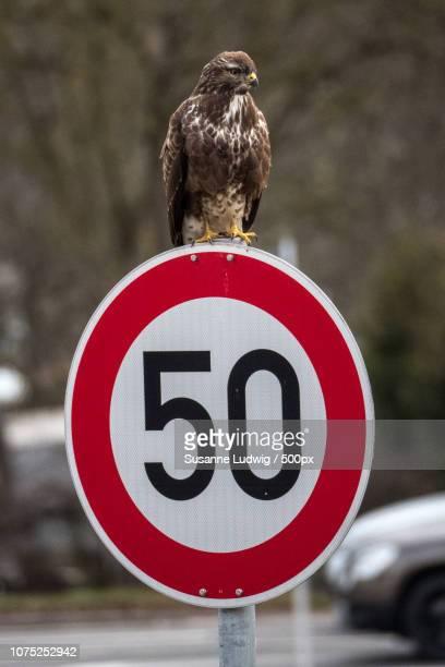 speed restriction
