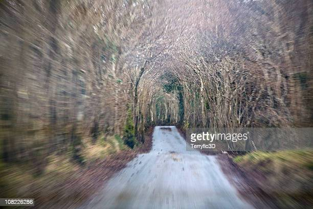Speeding Forward on Country Road Through Tunnel of Trees
