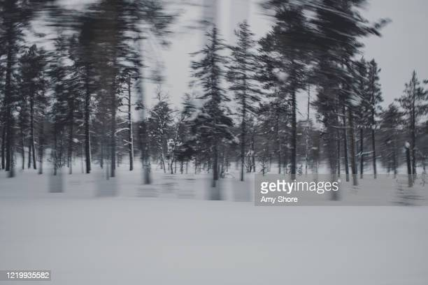 speeding through finland in winter - amy freeze stock pictures, royalty-free photos & images
