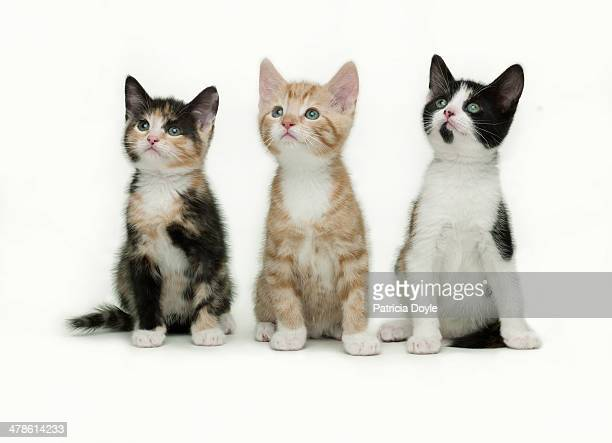 spellbound kittens - kitten stock pictures, royalty-free photos & images