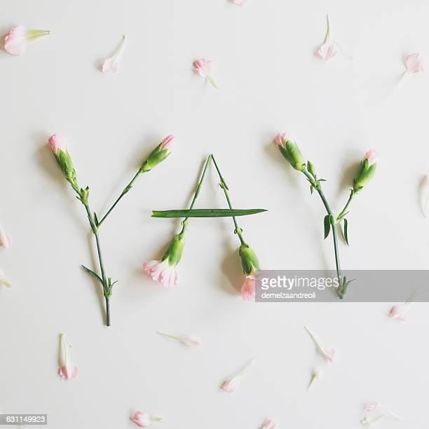 yay spelled out with carnations - cravo cravo da china imagens e fotografias de stock