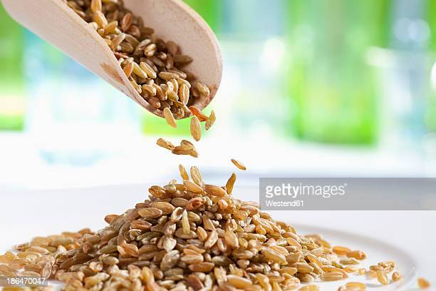 Spelt grains pouring from wooden scoop, close up