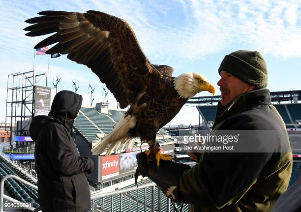 Spencer Williams curator of birds for the American Eagle Foundation holds Challenger a nonreleasable bald eagle on an upper deck at Lincoln Financial...