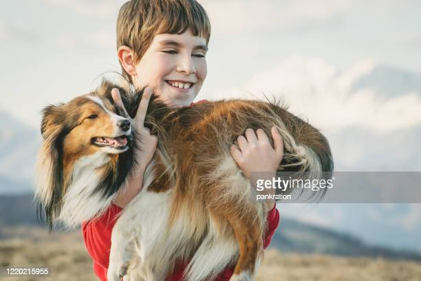 spending a nice sunny day with a family - collie stock pictures, royalty-free photos & images
