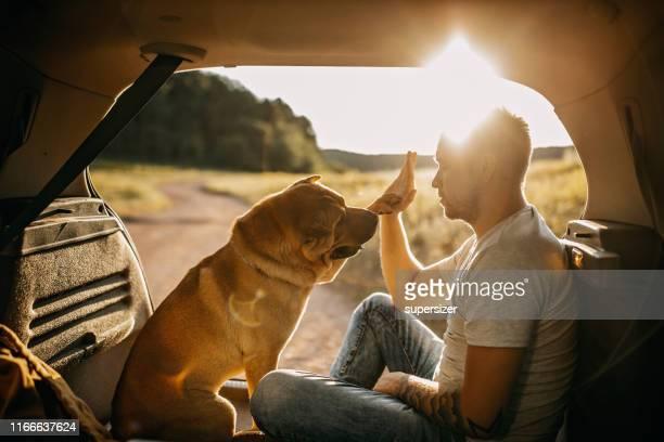 tillbringa dagen med hund i naturen - high five bildbanksfoton och bilder
