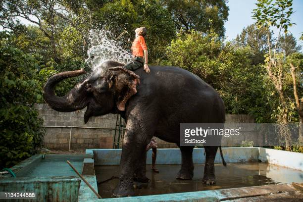 spending summer with elephants - kerala elephants stock pictures, royalty-free photos & images