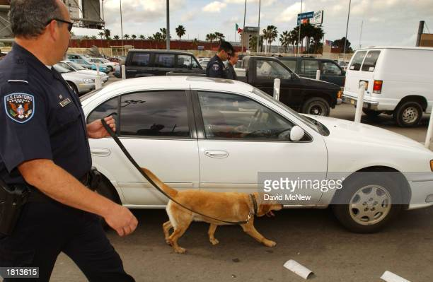 Spenser a drugsniffing yellow lab handled by US Customs canine enforcement officer Joe Cagigas follows close to a car entering the US from Mexico...
