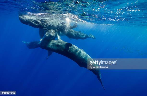 Sperm whale action