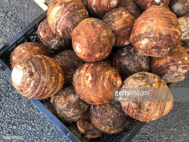sphere shape big taro - root vegetable stock pictures, royalty-free photos & images
