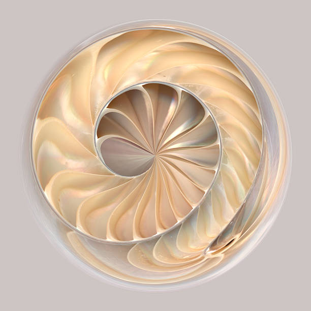 Spherical abstraction of seashell