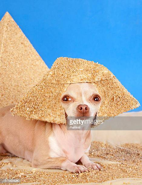 sphinx - chihuahua desert stock pictures, royalty-free photos & images