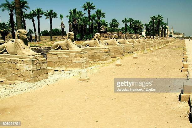 Sphinx Statues At Luxor Temple